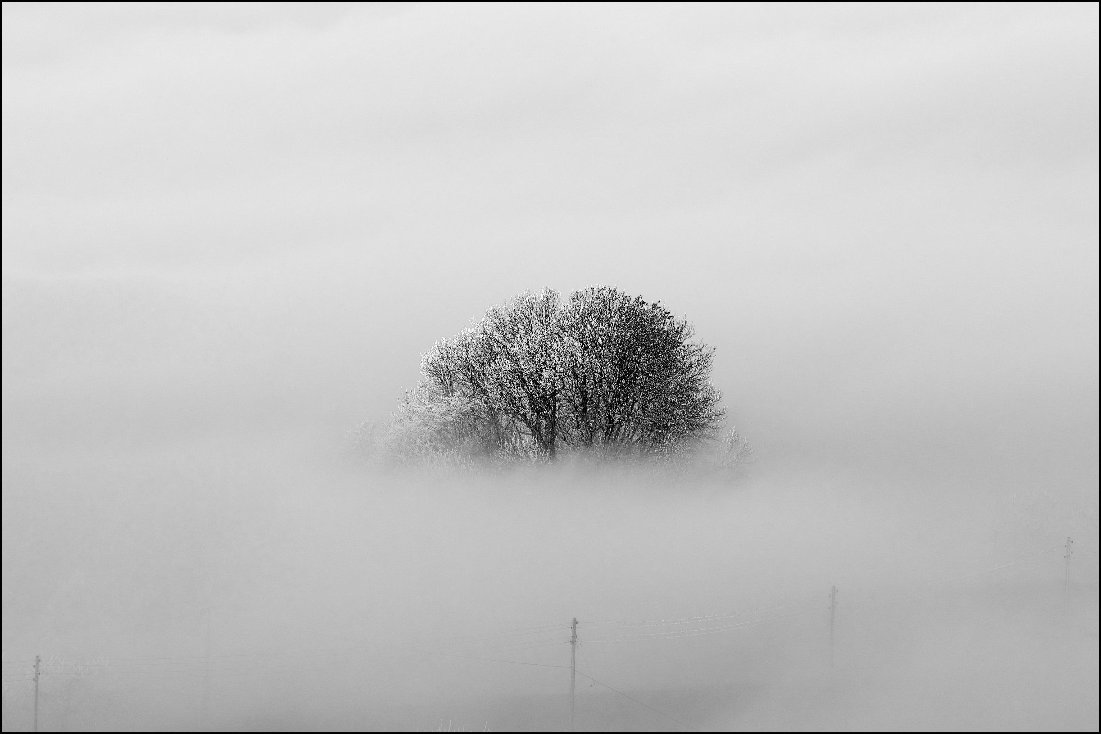 Nebel_Baum_1