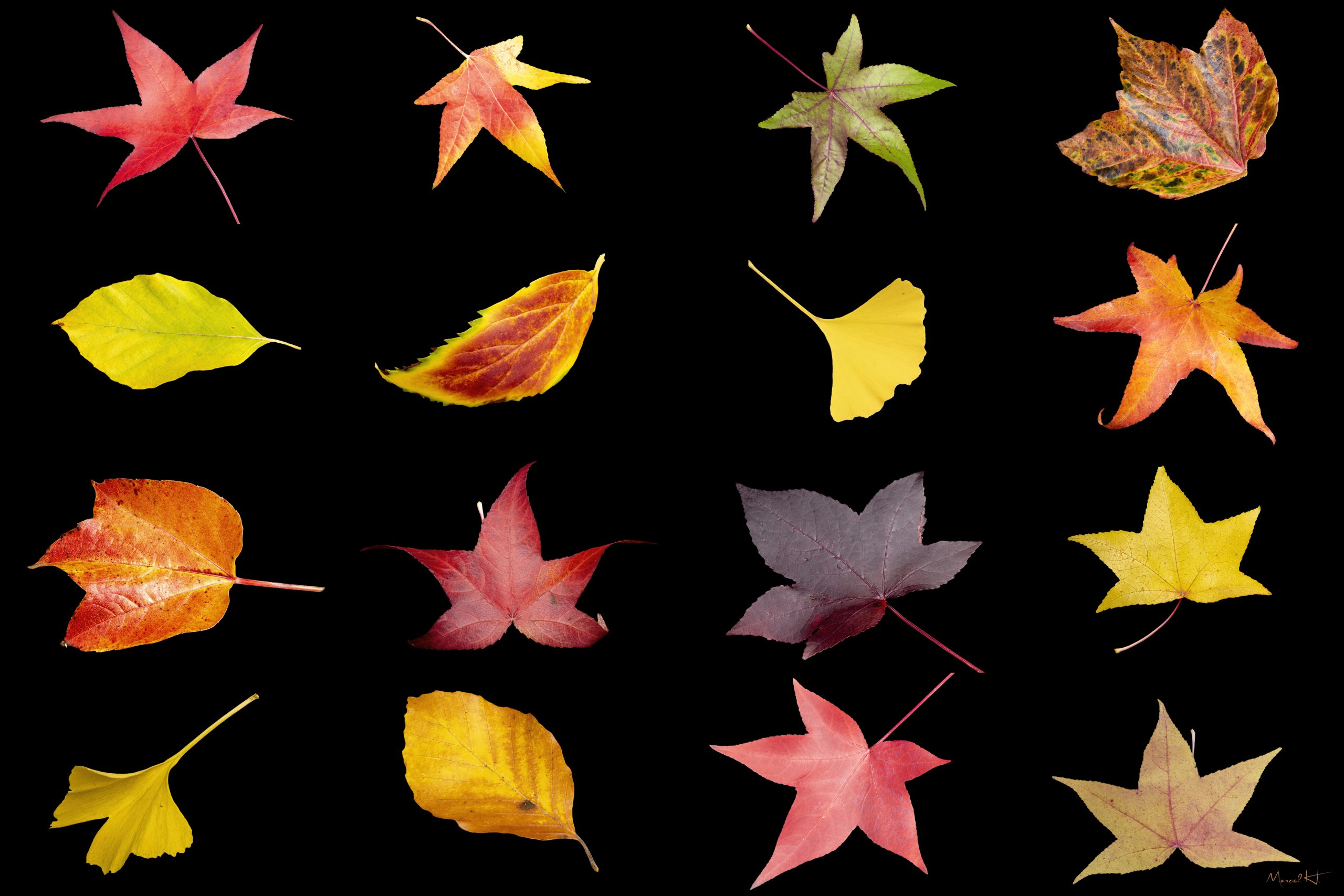 Colors_of_Fall_1