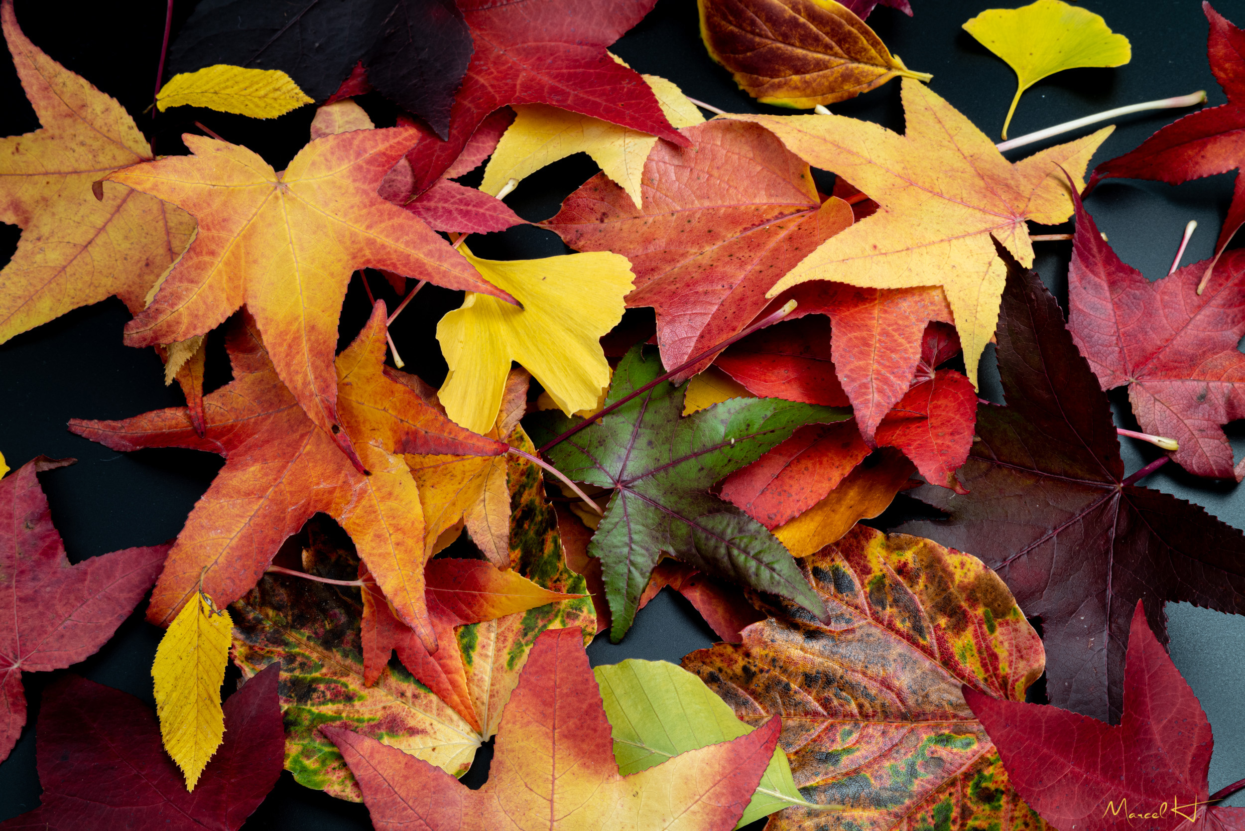 Colors_of_Fall_2