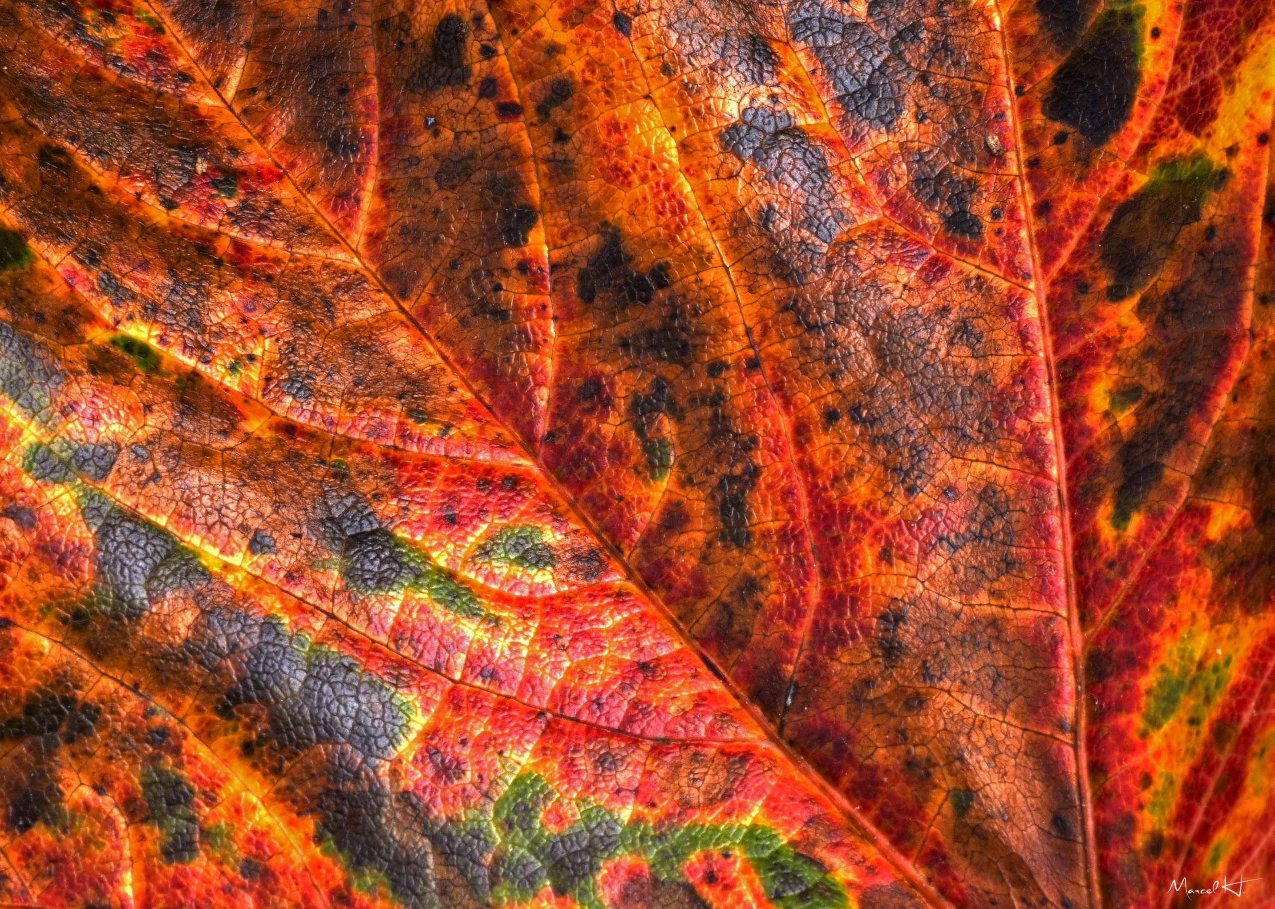 Colors_of_Fall_3