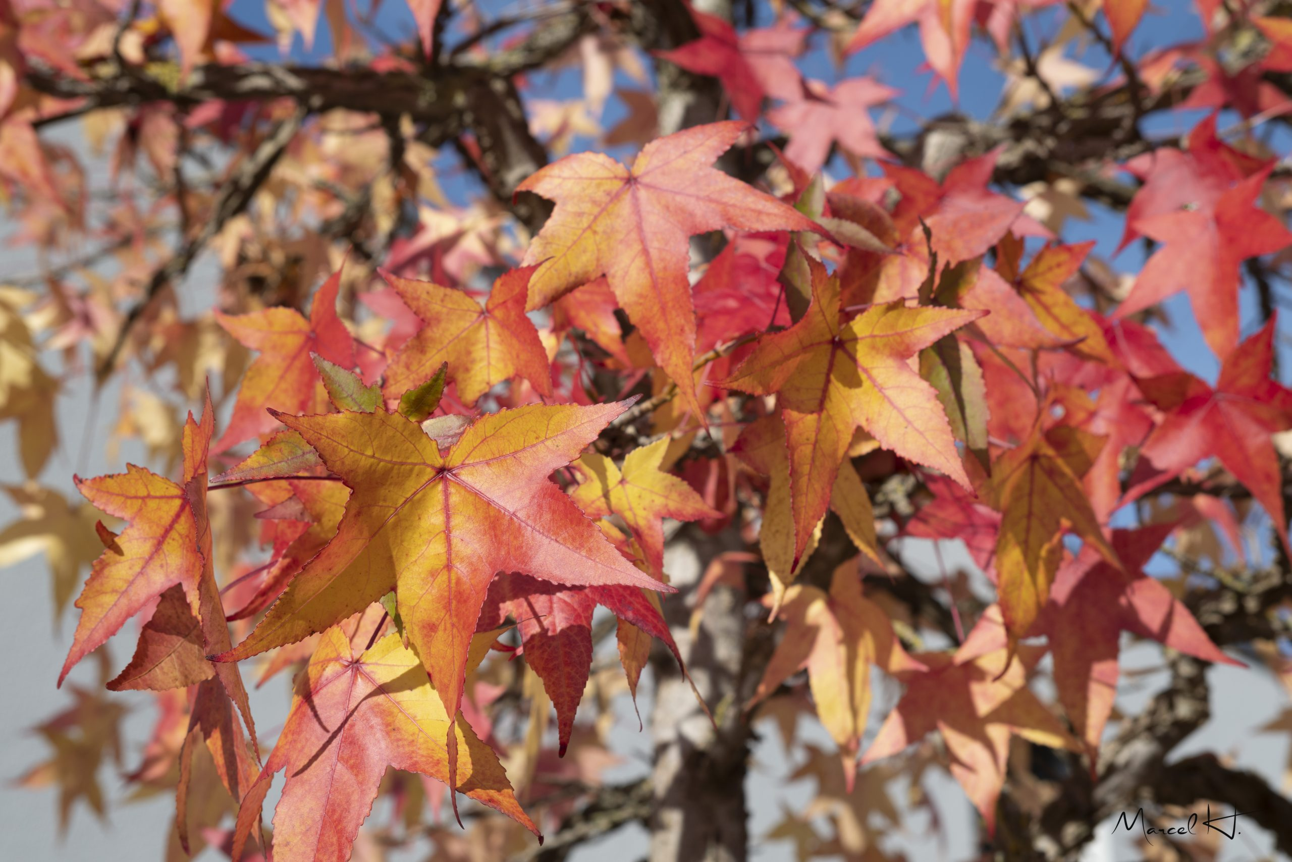 Colors_of_Fall_7
